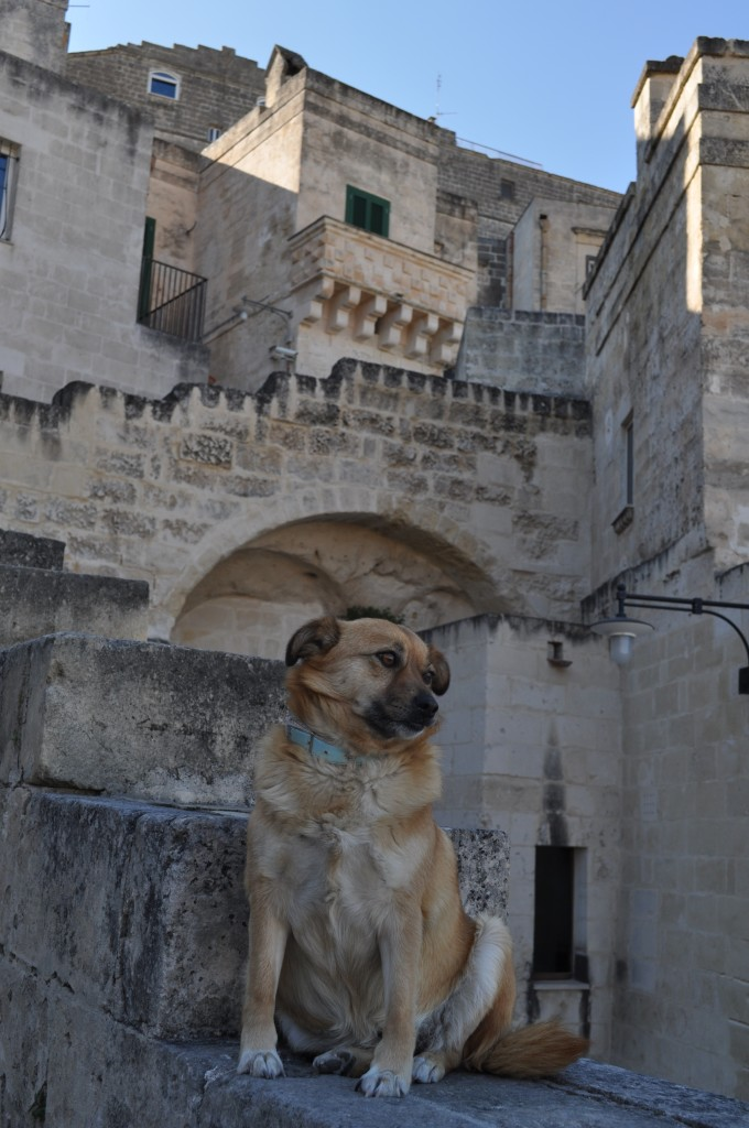 Dog in Matera